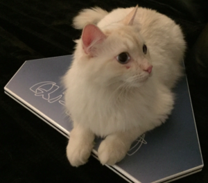 KatzeAufRegPlatte